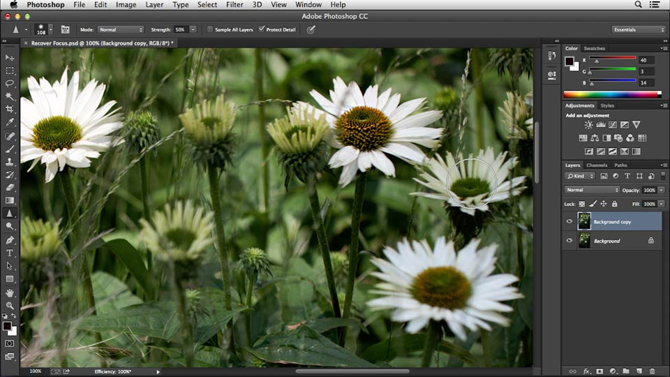 : Noise Reduction and Sharpening in Lightroom and Photoshop