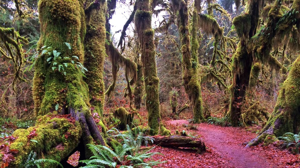 Welcome: Landscape Photography: Washington's Olympic National Park