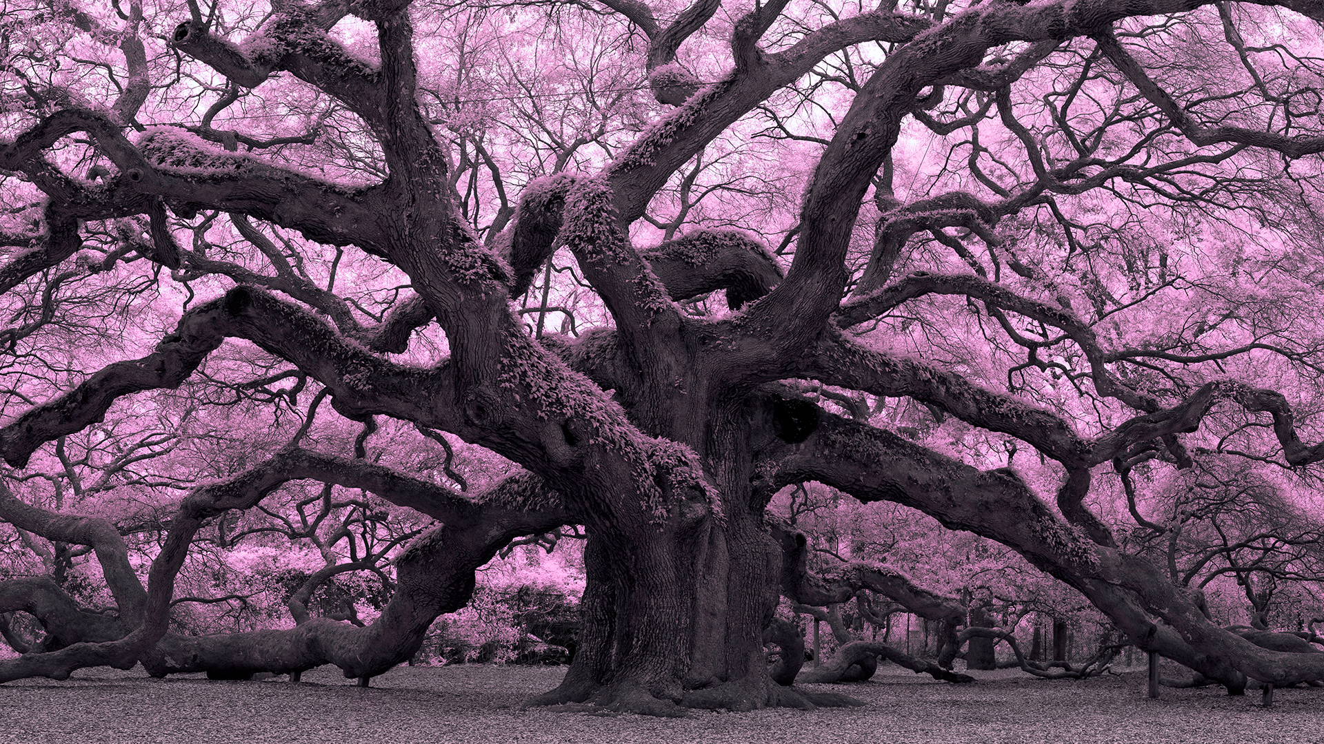 Welcome: Infrared Photography: Nature and Landscapes