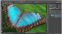 Image for Photoshop CC One-on-One: Fundamentals