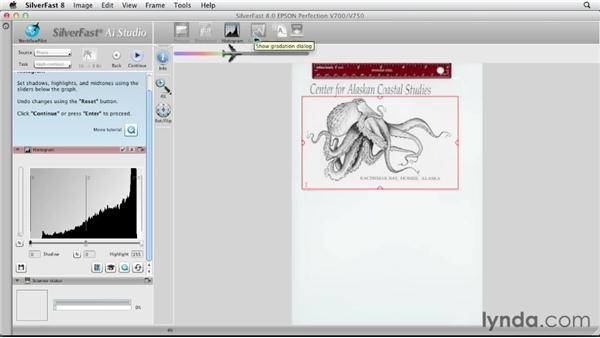 Scanning detailed line art : Scanning with SilverFast