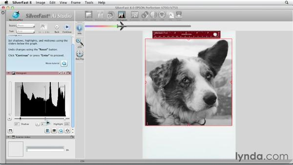 Scanning grayscale photos : Scanning with SilverFast