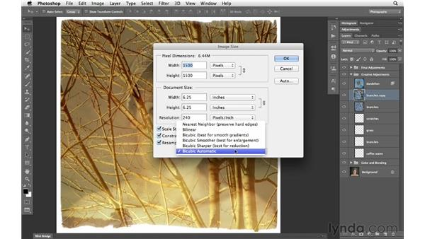 Free transforming a layer with the Bicubic Automatic interpolation option: Photoshop CS6 for Photographers New Features