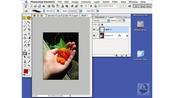 the palettes: Learning Photoshop Elements 2