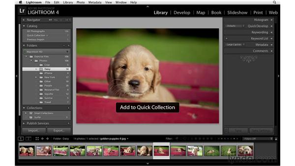 Using and showing Quick Collections: Lightroom Power Shortcuts