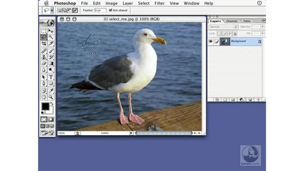 lasso tool: Learning Photoshop 7