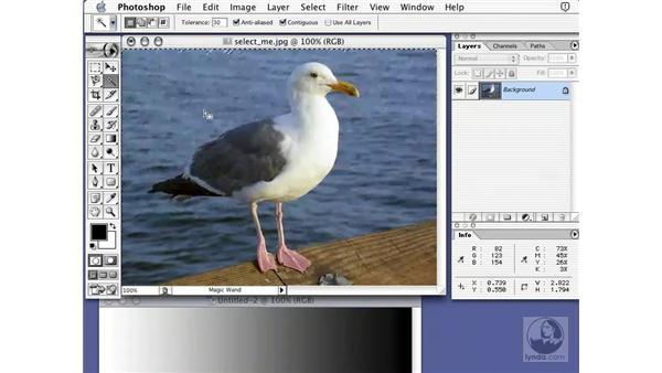 magic wand: Learning Photoshop 7