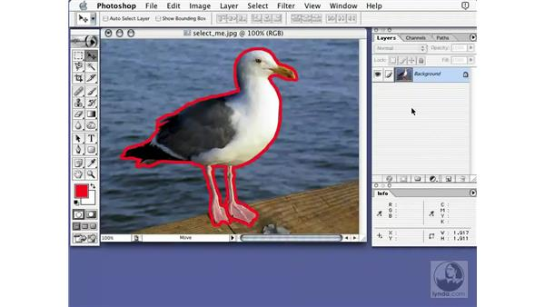 selection thingies: Learning Photoshop 7