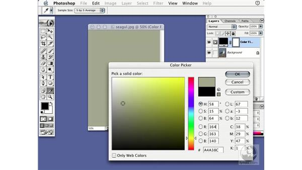 solid color layer: Learning Photoshop 7