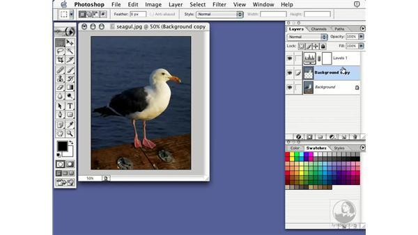 adjustment layer: Learning Photoshop 7