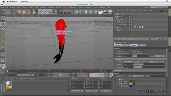 Binding joints and geometry: CINEMA 4D Essentials 8: Character Rigging and Xpresso