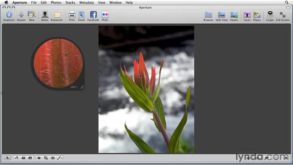 Using the Loupe for a closer look: Aperture 3 Essential Training (2012)