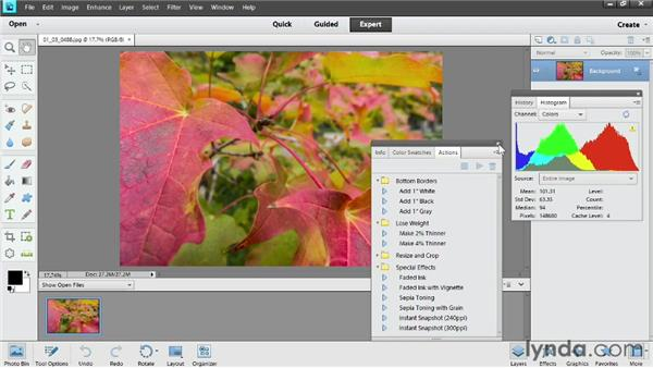 Arranging the panels: Photoshop Elements 11 Essentials: 02 Editing and Retouching Photos