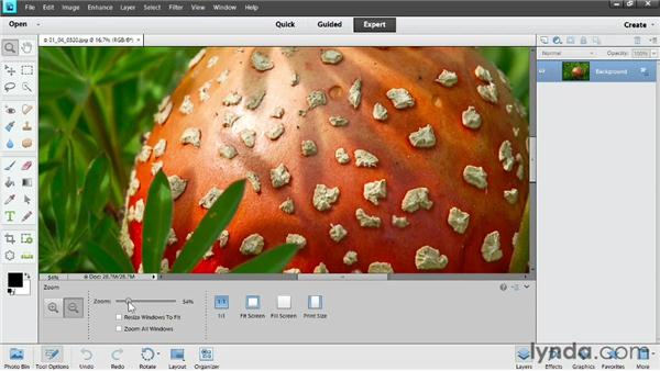 Zooming and panning: Photoshop Elements 11 Essentials: 02 Editing and Retouching Photos