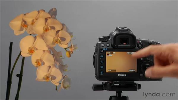 Using manual white balance: Shooting with the Canon 5D Mark III