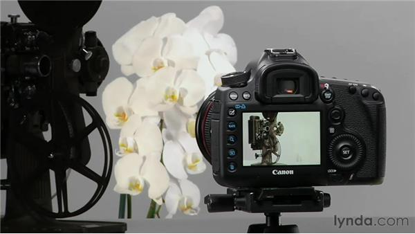 Working with focus points and metering: Shooting with the Canon 5D Mark III