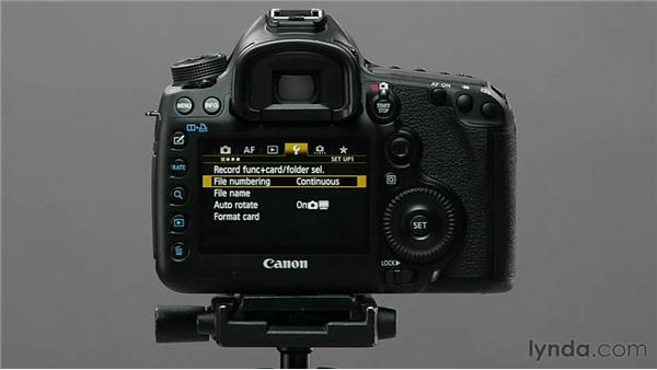 Exploring file numbering options: Shooting with the Canon 5D Mark III
