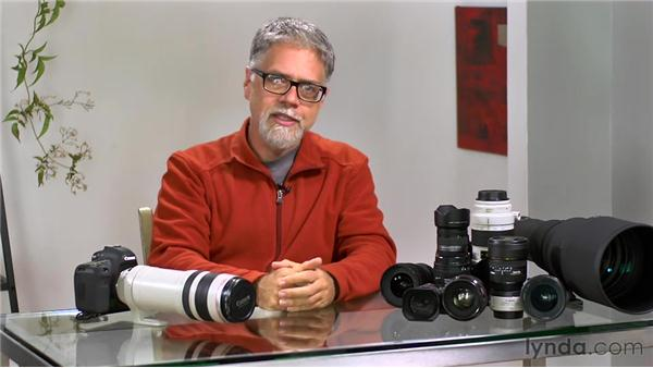 Understanding super telephoto: Foundations of Photography: Specialty Lenses
