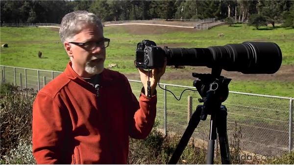 Working with teleconverters: Foundations of Photography: Specialty Lenses