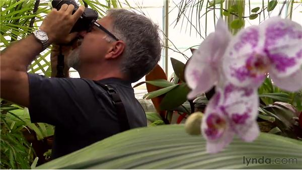 Understanding macro basics: Foundations of Photography: Specialty Lenses