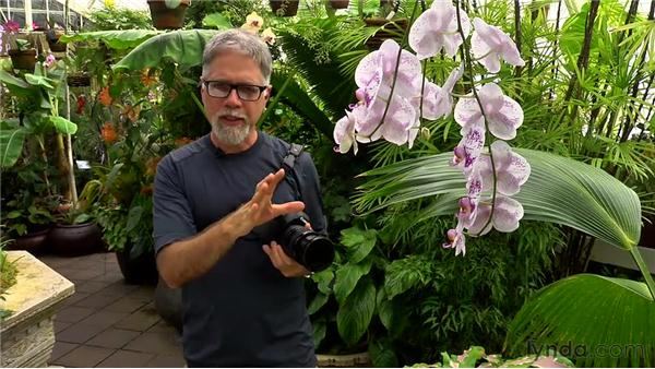 Shooting close: Foundations of Photography: Specialty Lenses