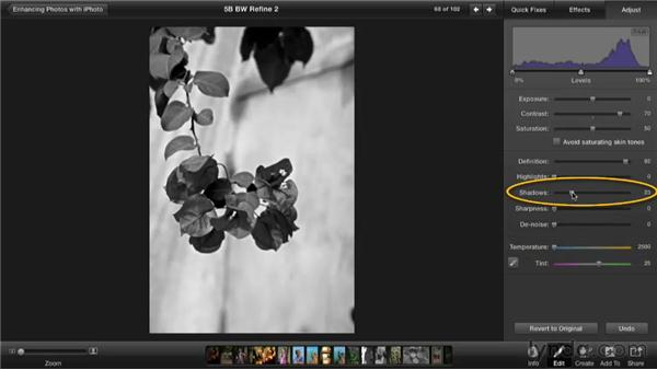 Refining a black-and-white effect with temperature: Enhancing Photos with iPhoto