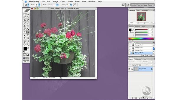 sponge tool: Photoshop CS Essential Training