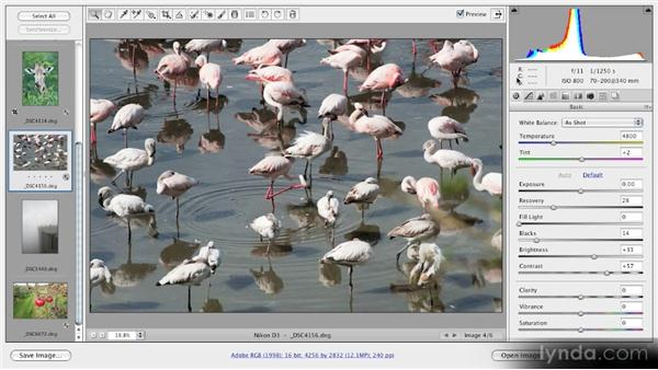 The Camera Raw interface: Getting Started with Adobe Camera Raw 5
