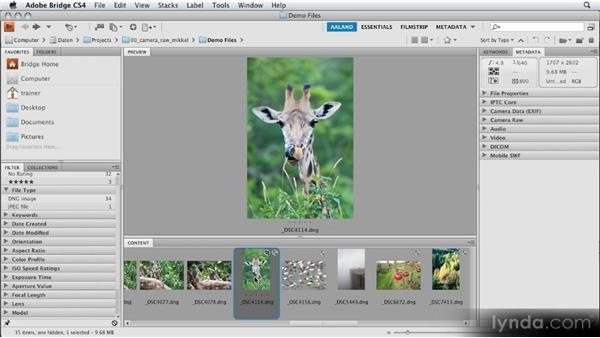 Opening RAW files in Camera Raw: Getting Started with Adobe Camera Raw 5