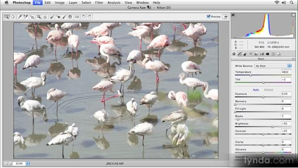 Camera Raw version check: Getting Started with Adobe Camera Raw 5