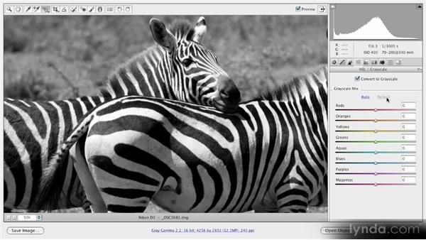 Basic black-and-white conversion: Getting Started with Adobe Camera Raw 5