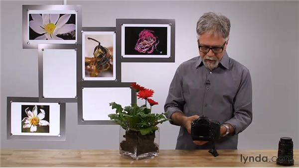 Understanding minimum focus distance: Foundations of Photography: Macro and Close-Up