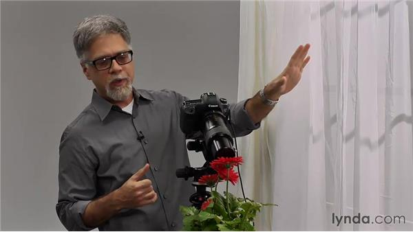 Shooting with the Canon 65 mm: Foundations of Photography: Macro and Close-Up