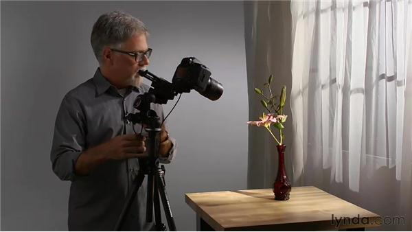 Macro and the angle of light: Foundations of Photography: Macro and Close-Up