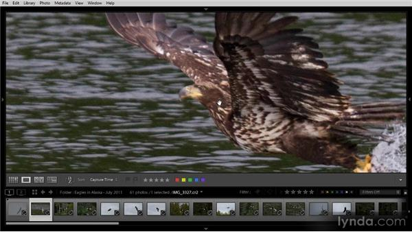 Picking and rejecting photos with flags: Lightroom 4 Image Management Workshop