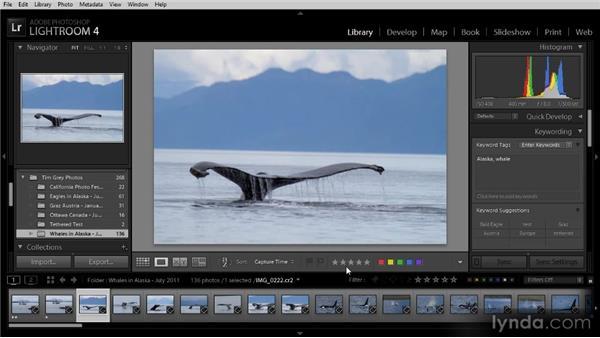 Assigning star ratings to photos: Lightroom 4 Image Management Workshop