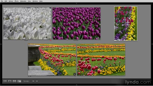 Using Survey view: Getting Started with Lightroom 4
