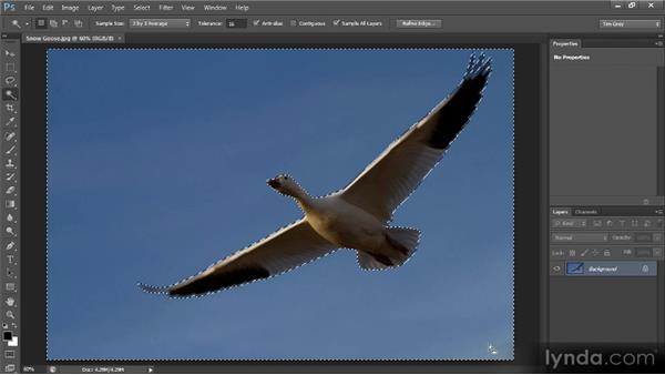 Inverting a selection: Photoshop CS6 Selections and Layer Masking Workshop