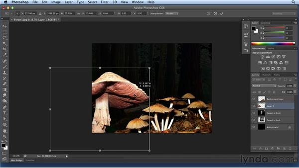 Adding mushrooms: Bert Monroy: Dreamscapes Volume 3