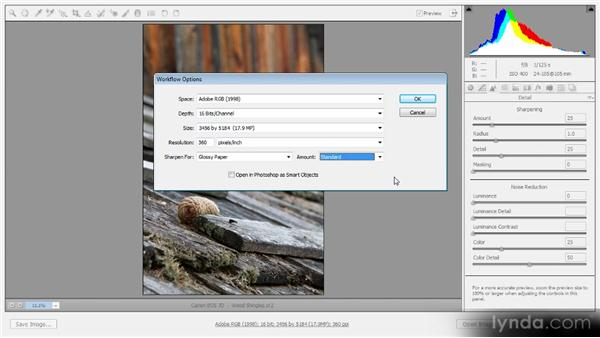 Output sharpening in Adobe Camera Raw: Optimal Output with Photoshop CS6