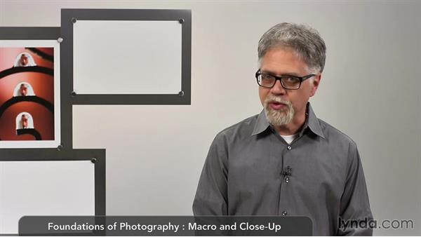 Intro: Lens-Reversal Macro Photography