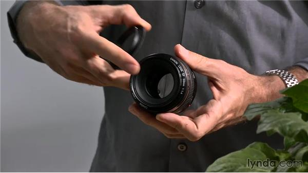 Working with lens-reversal rings: Lens-Reversal Macro Photography