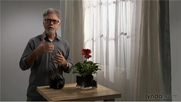 Understanding exposure with a reversed lens: Lens-Reversal Macro Photography