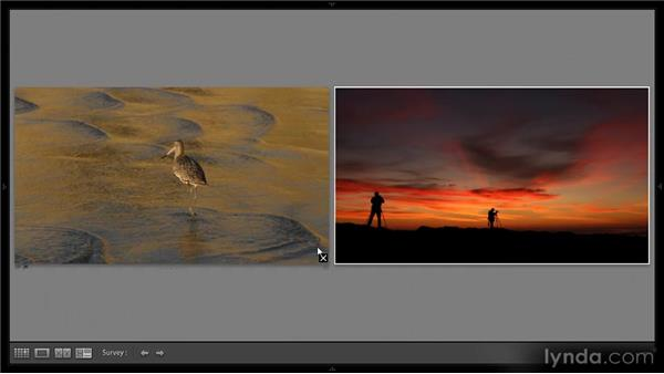 Compare and Survey view limitations: Lightroom 4 Video Workshop