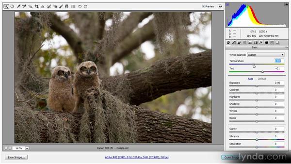White balance adjustments: Photoshop CS6 Raw Workshop