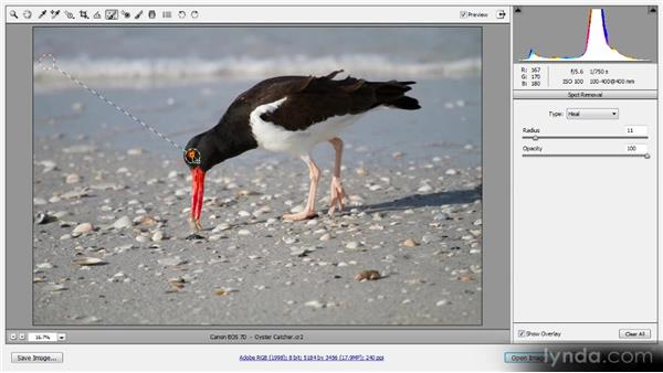Spot removal: Photoshop CS6 Raw Workshop