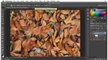 Image for Creating a painterly look with the Diffuse filter