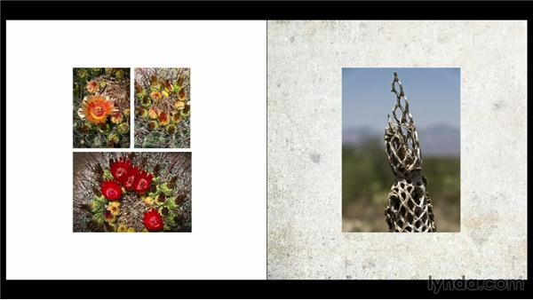 Looking at background colors, images, and textures: Designing a Photo Book