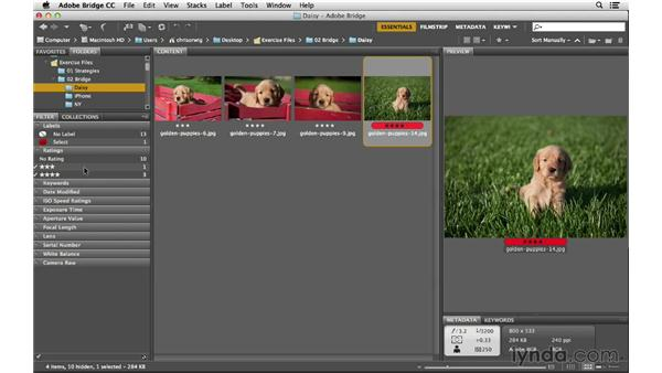Rating, ranking, and filtering your photographs: Photoshop CC for Photographers: Fundamentals