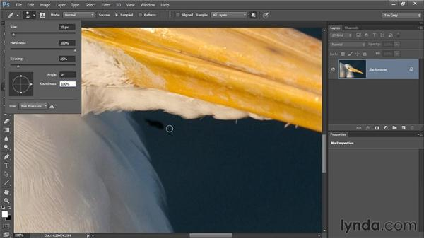 Adjusting brush shape: Photoshop CC Image Cleanup Workshop